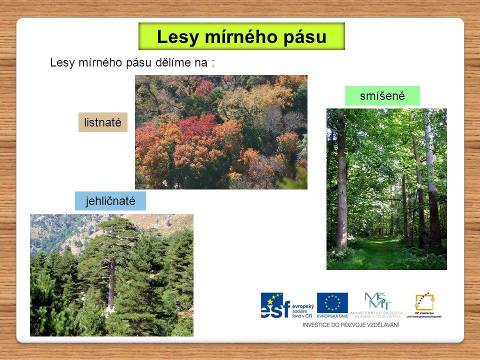 Podnebí Jehličnaté lesy se již rozprostírají poněkud severněji, proto je zde podnebí chladnější než v lesích listnatých.