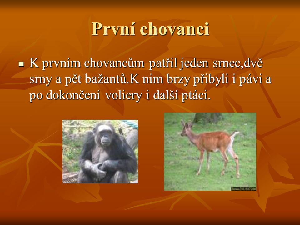 Opravdová zoo V lednu 1951 zástupci ministra rozhodli po jednání s Ostravskými činiteli,že v Ostravě vznikne provizorní zoologická zahrada což podpořili i odborníci v čele s doc.O.