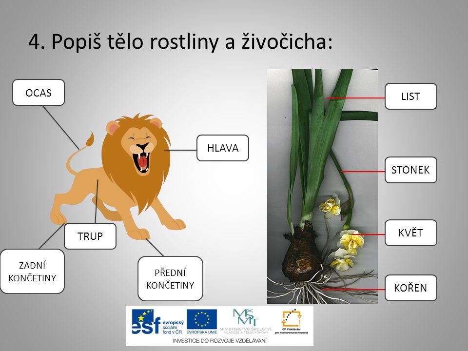 4. Popiš tělo rostliny a živočicha: LIST STONEK KVĚT KOŘEN HLAVA OCAS ZADNÍ KONČETINY TRUP PŘEDNÍ KONČETINY