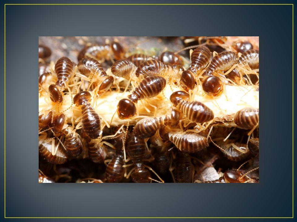 Sociální hmyz je takové společenství hmyzu, které je tvořeno potomky jednoho nebo jen několika málo párů.