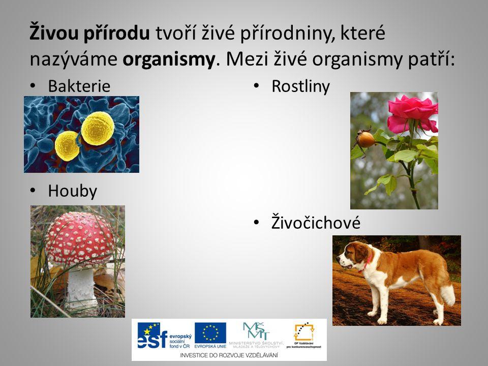 Živou přírodu tvoří živé přírodniny, které nazýváme organismy. Mezi živé organismy patří: Bakterie Houby Rostliny Živočichové