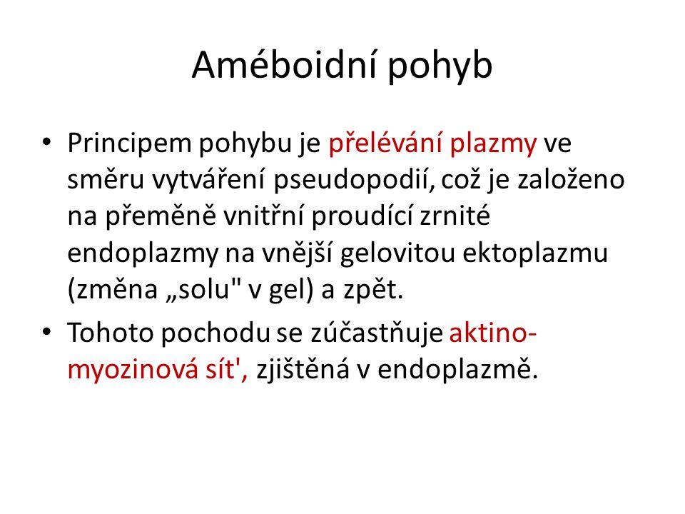 Améboidní pohyb Principem pohybu je přelévání plazmy ve směru vytváření pseudopodií, což je založeno na přeměně vnitřní proudící zrnité endoplazmy na