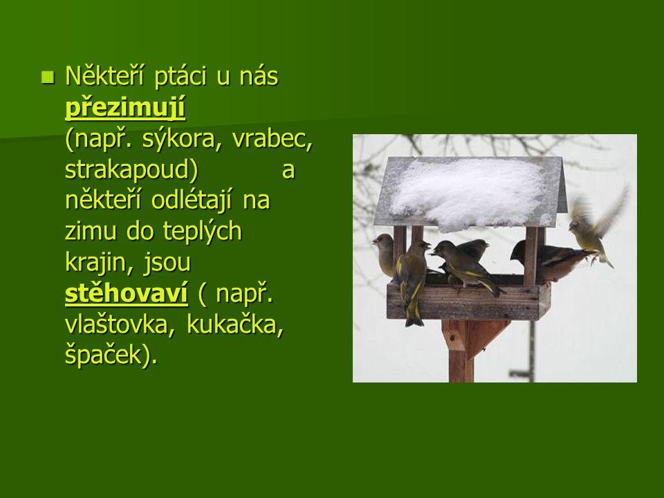 Někteří ptáci u nás přezimují (např. sýkora, vrabec, strakapoud) a někteří odlétají na zimu do teplých krajin, jsou stěhovaví ( např. vlaštovka, kukač