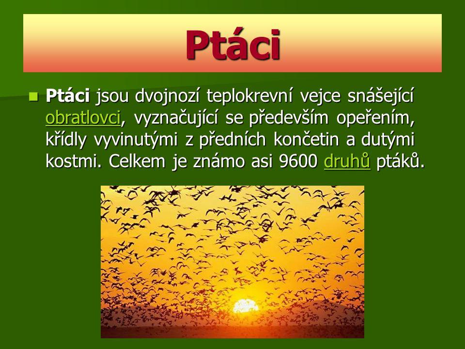 Význam ptáků Udržují biologickou rovnováhu v přírodě, protože vyhubí mnoho škodlivého hmyzu.