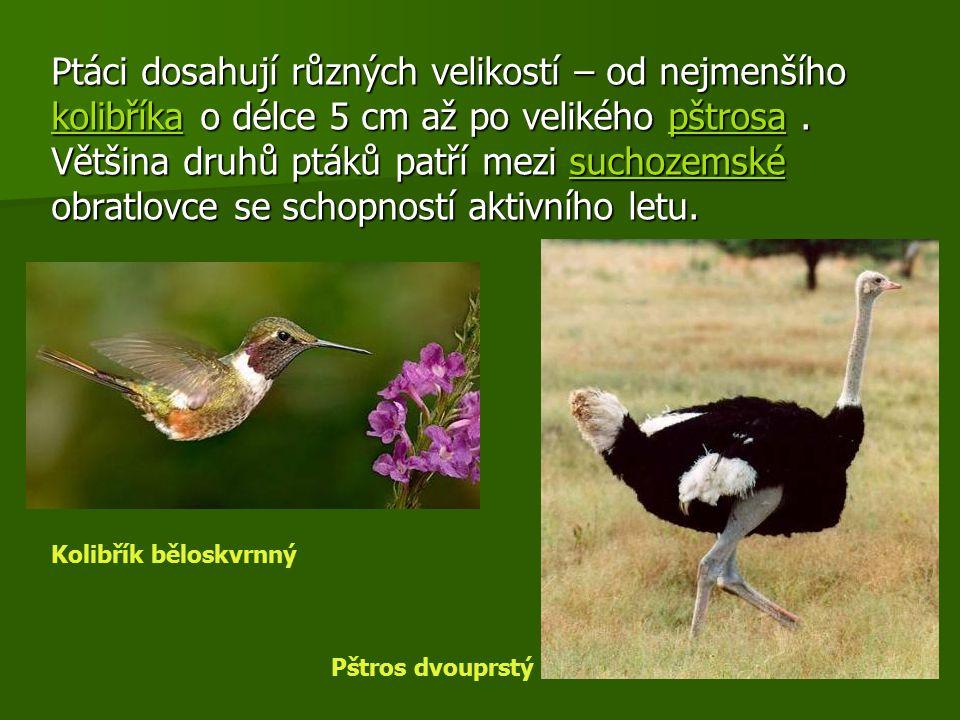 Ptáci dosahují různých velikostí – od nejmenšího kkkk oooo llll iiii bbbb řřřř íííí kkkk aaaa o délce 5 cm až po velikého p p p p p šššš tttt rrrr ooo