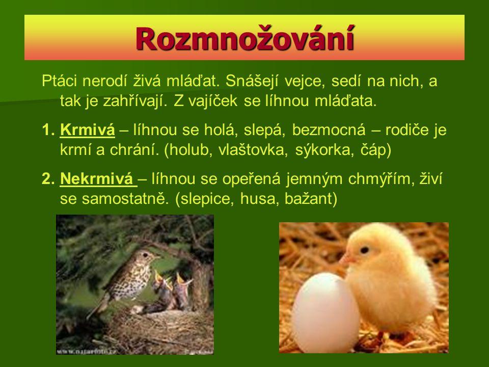 Rozmnožování Ptáci nerodí živá mláďat. Snášejí vejce, sedí na nich, a tak je zahřívají. Z vajíček se líhnou mláďata. 1.Krmivá – líhnou se holá, slepá,