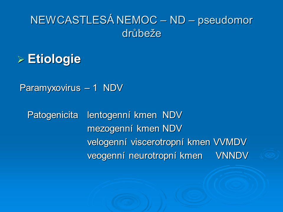 NEWCASTLESÁ NEMOC – ND – pseudomor drůbeže  Etiologie Paramyxovirus – 1 NDV Paramyxovirus – 1 NDV Patogenicita lentogenní kmen NDV Patogenicita lento