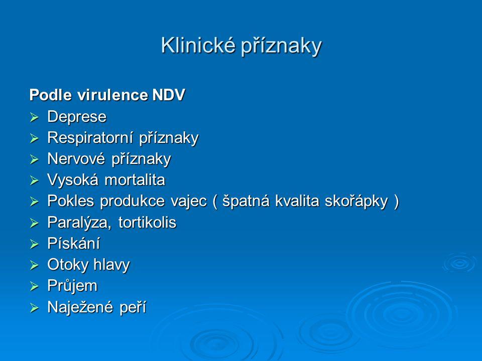 Klinické příznaky Podle virulence NDV  Deprese  Respiratorní příznaky  Nervové příznaky  Vysoká mortalita  Pokles produkce vajec ( špatná kvalita