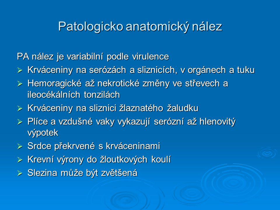 Patologicko anatomický nález PA nález je variabilní podle virulence  Krváceniny na serózách a sliznicích, v orgánech a tuku  Hemoragické až nekrotic