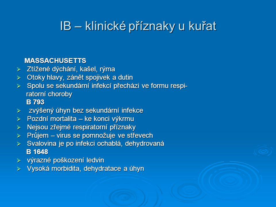 IB – klinické příznaky u kuřat MASSACHUSETTS MASSACHUSETTS  Ztížené dýchání, kašel, rýma  Otoky hlavy, zánět spojivek a dutin  Spolu se sekundární
