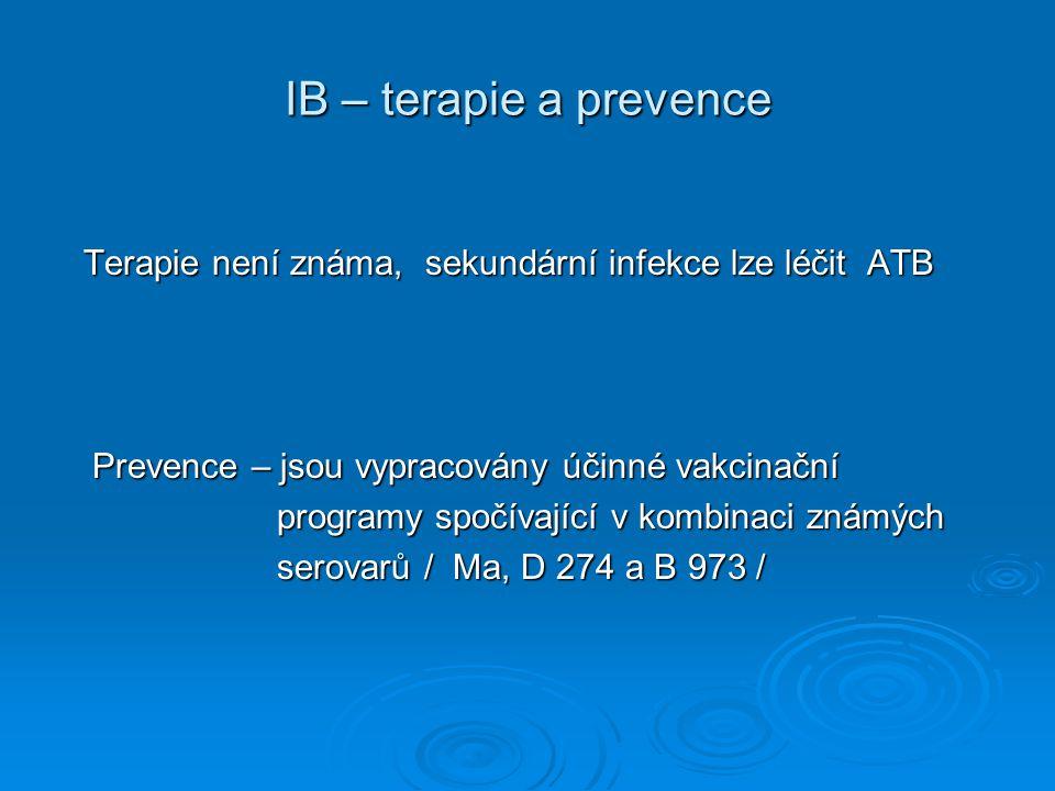 IB – terapie a prevence Terapie není známa, sekundární infekce lze léčit ATB Terapie není známa, sekundární infekce lze léčit ATB Prevence – jsou vypr