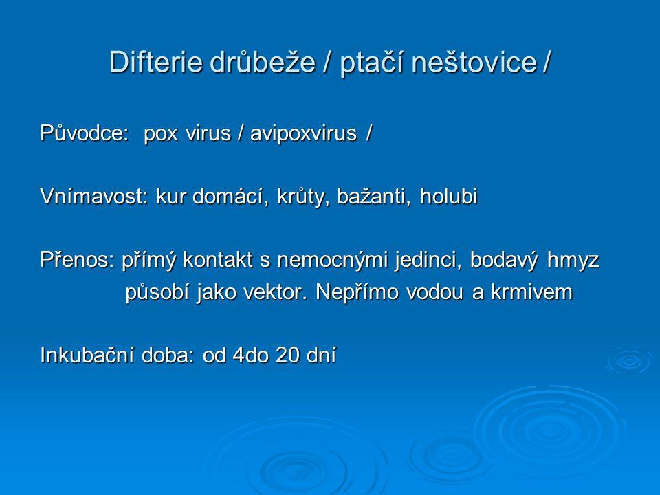 Difterie drůbeže / ptačí neštovice / Původce: pox virus / avipoxvirus / Vnímavost: kur domácí, krůty, bažanti, holubi Přenos: přímý kontakt s nemocným