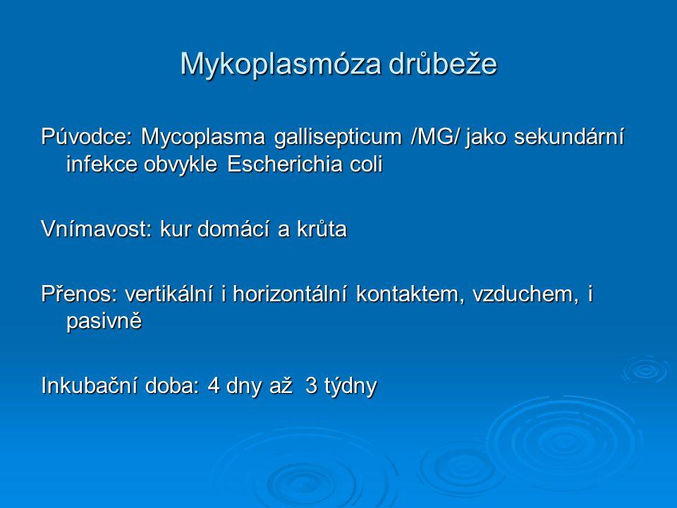 Mykoplasmóza drůbeže Púvodce: Mycoplasma gallisepticum /MG/ jako sekundární infekce obvykle Escherichia coli Vnímavost: kur domácí a krůta Přenos: ver