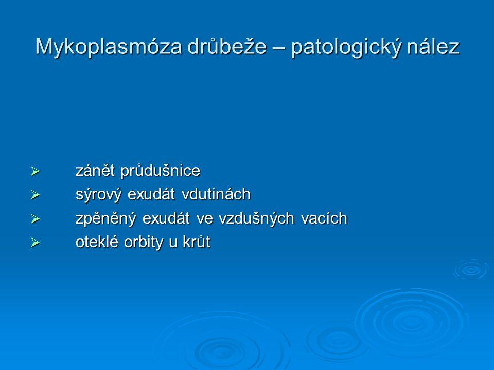 Mykoplasmóza drůbeže – patologický nález  zánět průdušnice  sýrový exudát vdutinách  zpěněný exudát ve vzdušných vacích  oteklé orbity u krůt
