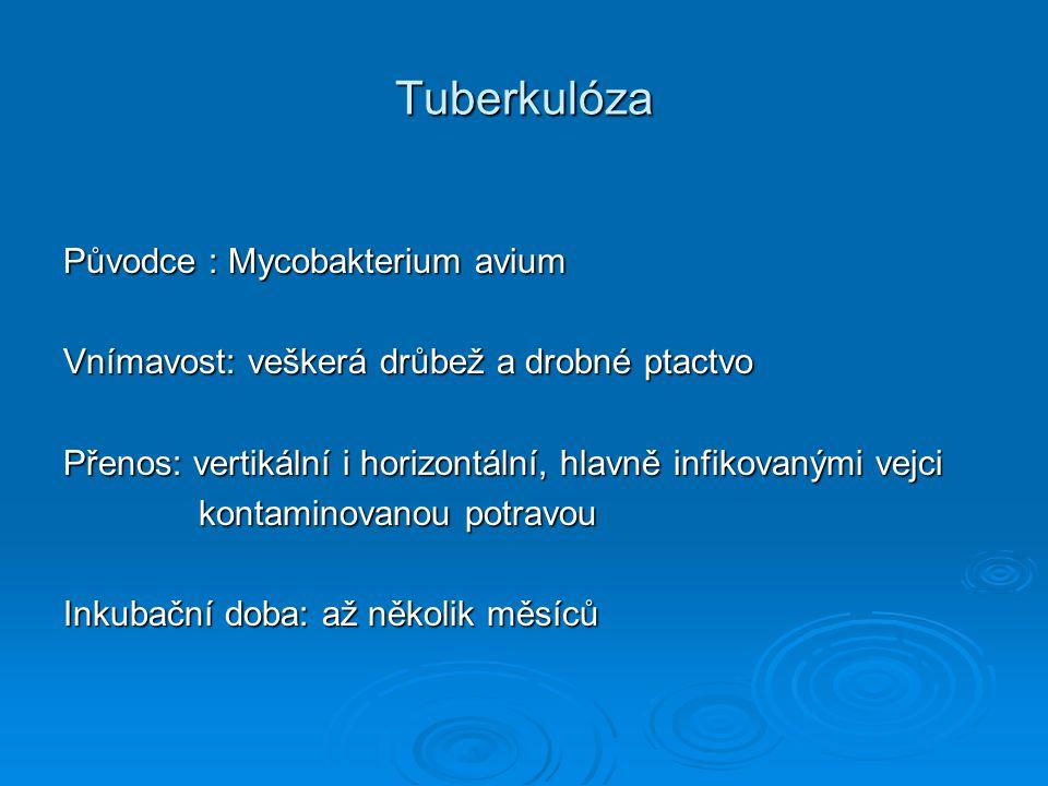 Tuberkulóza Původce : Mycobakterium avium Vnímavost: veškerá drůbež a drobné ptactvo Přenos: vertikální i horizontální, hlavně infikovanými vejci kont