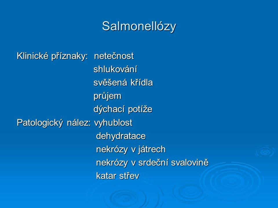 Salmonellózy  Diagnostika: bakteriologické vyšetření – identifikace rychlá sklíčková aglutinace rychlá sklíčková aglutinace ELISA ELISA  Terapie: ATB – antibiogram  Profylaxe: pravidelná bakt.