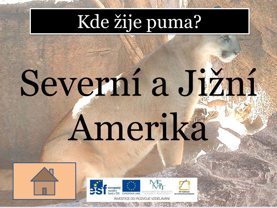 Kde žije puma? Severní a Jižní Amerika