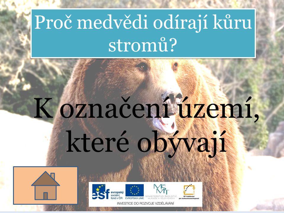 Proč medvědi odírají kůru stromů? K označení území, které obývají