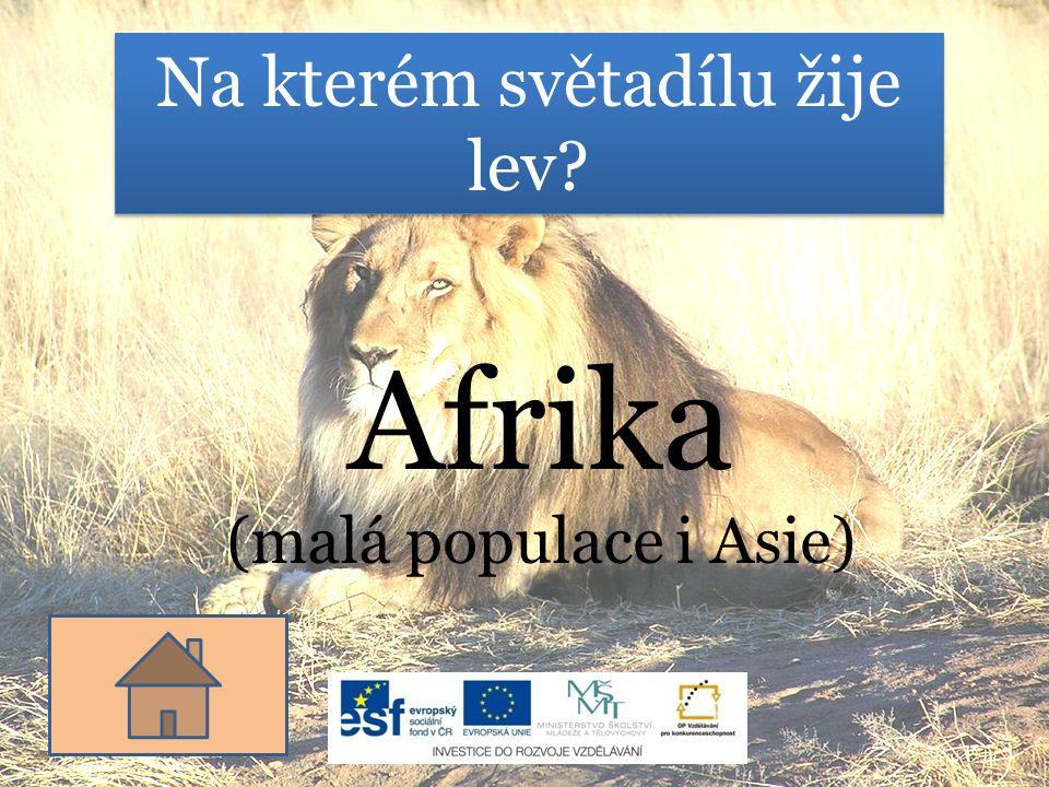 Na kterém světadílu žije lev? Afrika (malá populace i Asie)