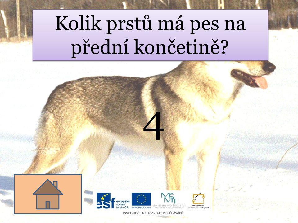 Kolik prstů má pes na přední končetině? 4