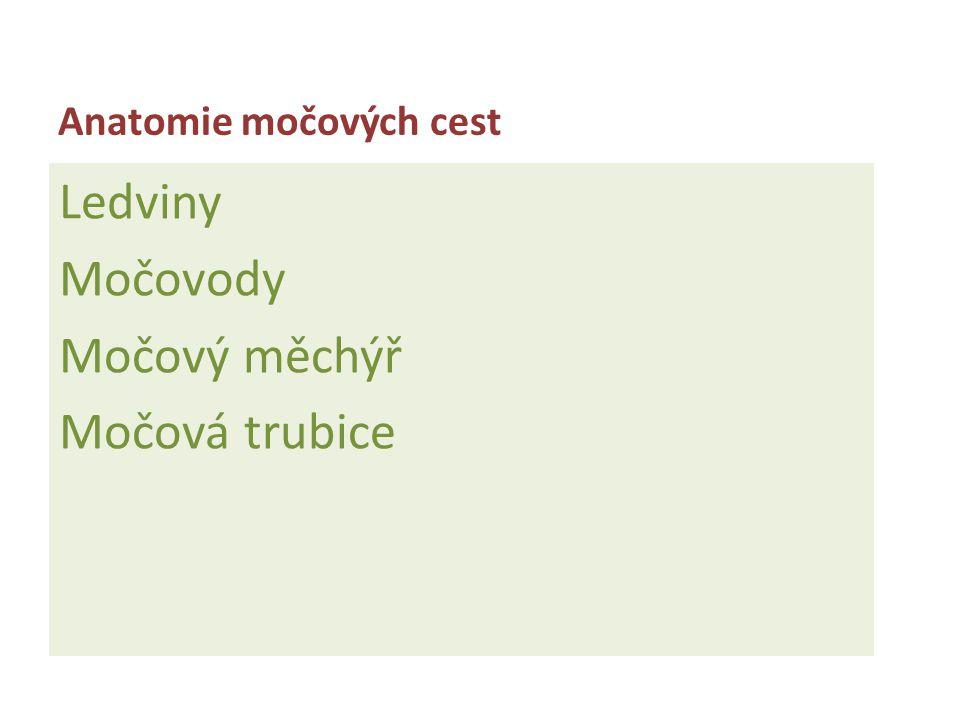 Anatomie močových cest Ledviny Močovody Močový měchýř Močová trubice