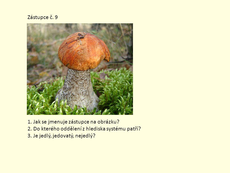 Zástupce č. 9 1. Jak se jmenuje zástupce na obrázku? 2. Do kterého oddělení z hlediska systému patří? 3. Je jedlý, jedovatý, nejedlý?