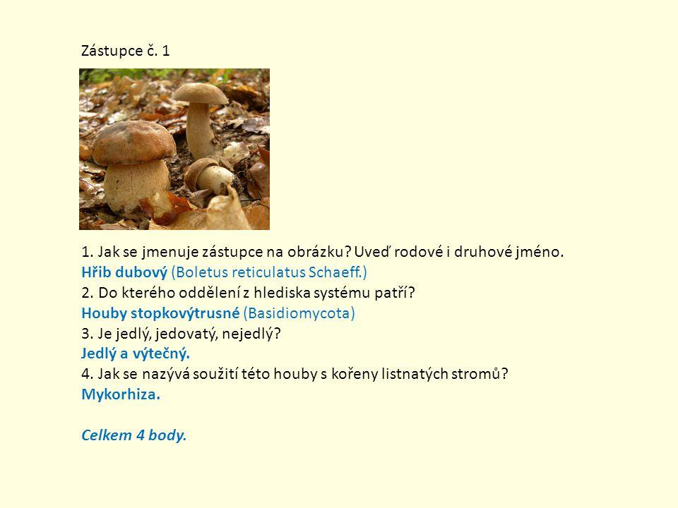 Zástupce č. 1 1. Jak se jmenuje zástupce na obrázku? Uveď rodové i druhové jméno. Hřib dubový (Boletus reticulatus Schaeff.) 2. Do kterého oddělení z