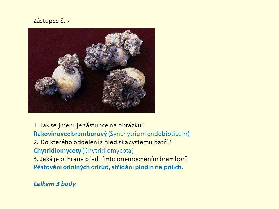 Zástupce č. 7 1. Jak se jmenuje zástupce na obrázku? Rakovinovec bramborový (Synchytrium endobioticum) 2. Do kterého oddělení z hlediska systému patří