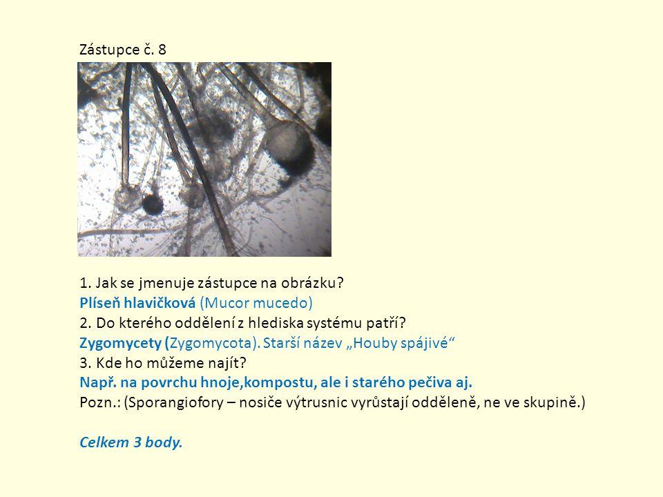 Zástupce č. 8 1. Jak se jmenuje zástupce na obrázku? Plíseň hlavičková (Mucor mucedo) 2. Do kterého oddělení z hlediska systému patří? Zygomycety (Zyg