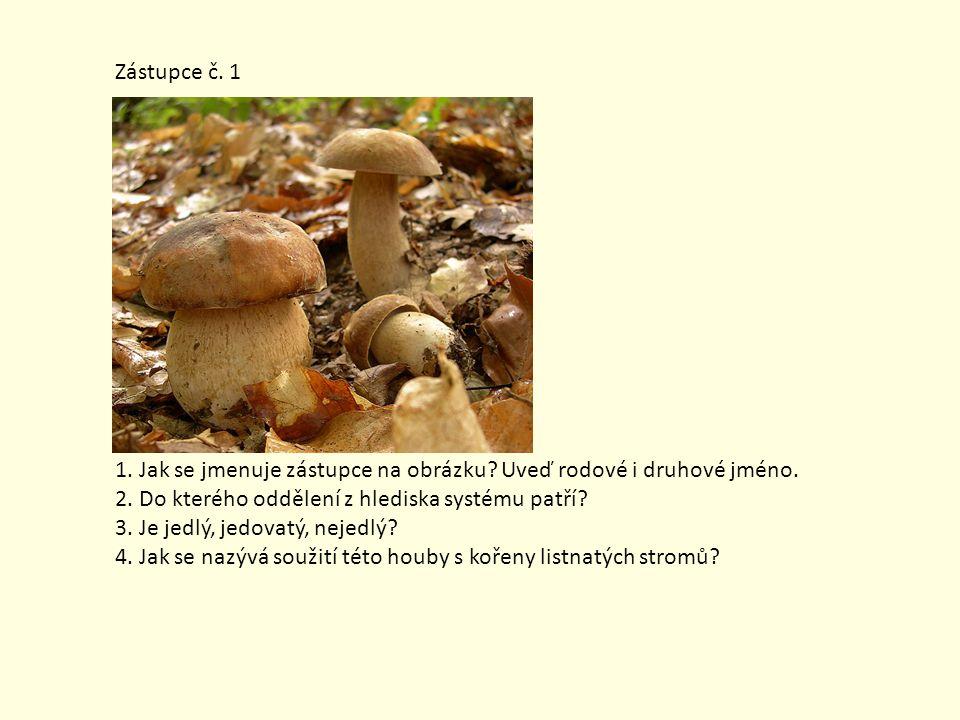 Zástupce č.12 1. Jak se jmenuje zástupce na obrázku.