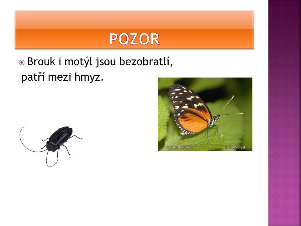  Brouk i motýl jsou bezobratlí, patří mezi hmyz.