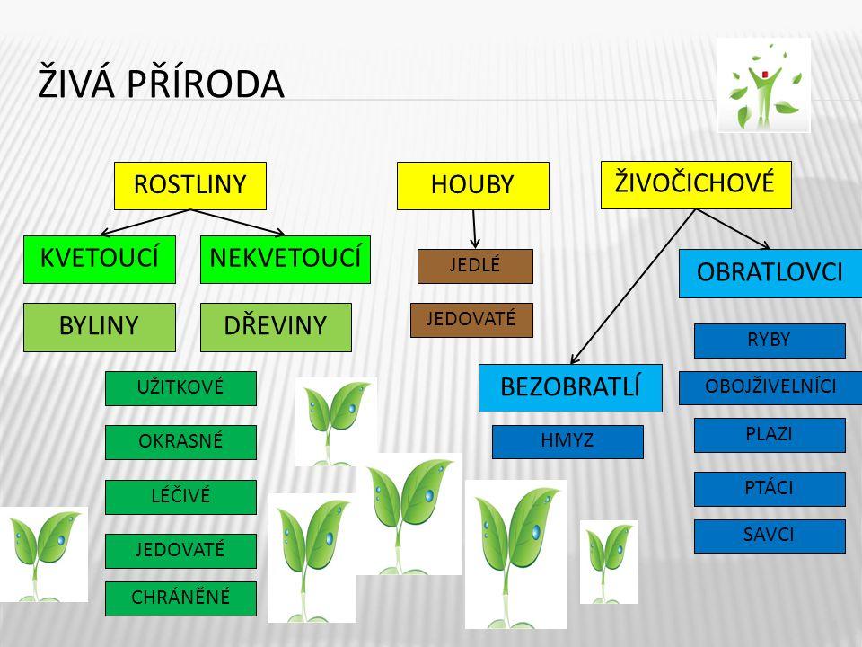 ŽIVÁ PŘÍRODA SPOLEČNÉ ZNAKY ROSTLIN 5 VYŽIVUJÍ SE Jsou jediným zdrojem kyslíku – spotřebovávají oxid uhličitý, uvolňují kyslík, k výživě potřebují i světlo, vodu a živiny z půdy Vylučují kyslík i oxid uhličitý Všemi částmi těla za světla i tmy, spotřebovávají kyslík a uvolňují oxid uhličitý VYLUČUJÍ DÝCHAJÍ POHYBUJÍ SE ROZMNOŽUJÍ SE Nemohou se pohybovat z místa na místo – mají kořeny v zemi, pohybují částmi svého těla Kvetoucí – semeny, podzemními částmi – oddenky, cibulemi, hlízami, nadzemními částmi – odnožemi nekvetoucí – výtrusy, řízkováním