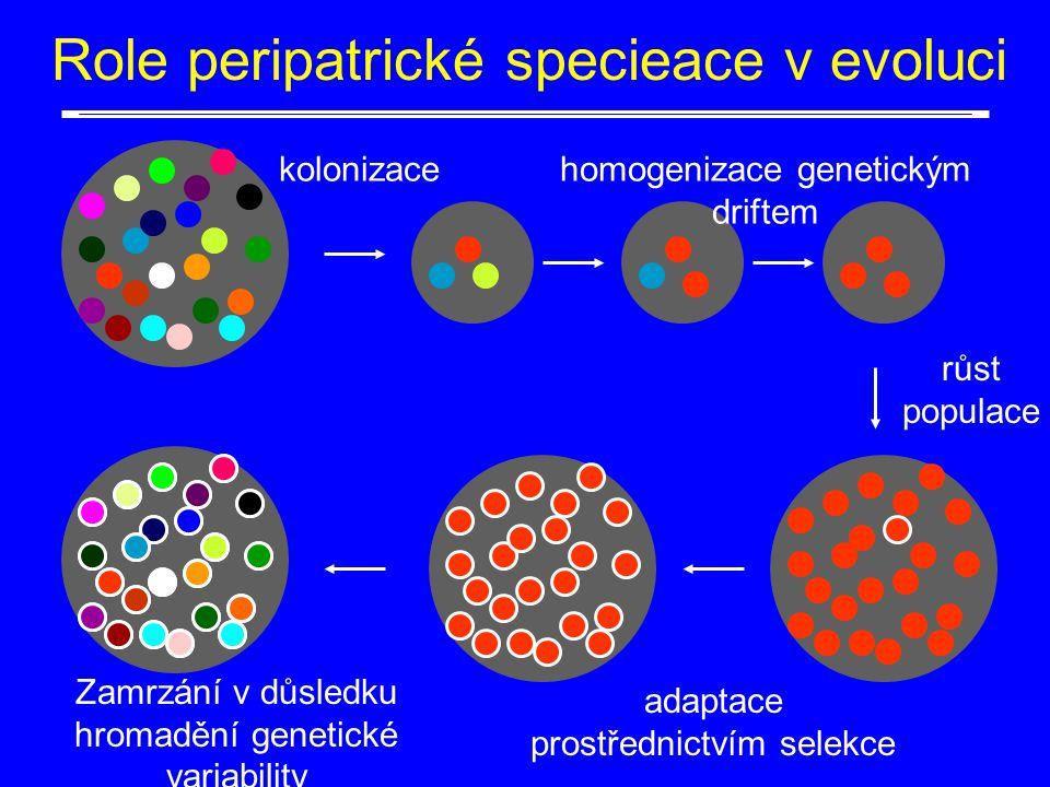 kolonizace Role peripatrické specieace v evoluci růst populace homogenizace genetickým driftem adaptace prostřednictvím selekce Zamrzání v důsledku hr