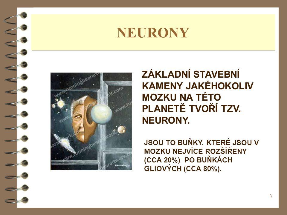 3 NEURONY ZÁKLADNÍ STAVEBNÍ KAMENY JAKÉHOKOLIV MOZKU NA TÉTO PLANETĚ TVOŘÍ TZV. NEURONY. JSOU TO BUŇKY, KTERÉ JSOU V MOZKU NEJVÍCE ROZŠÍŘENY (CCA 20%)