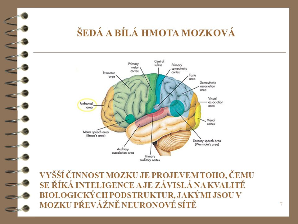 7 ŠEDÁ A BÍLÁ HMOTA MOZKOVÁ VYŠŠÍ ČINNOST MOZKU JE PROJEVEM TOHO, ČEMU SE ŘÍKÁ INTELIGENCE A JE ZÁVISLÁ NA KVALITĚ BIOLOGICKÝCH PODSTRUKTUR, JAKÝMI JSOU V MOZKU PŘEVÁŽNĚ NEURONOVÉ SÍTĚ