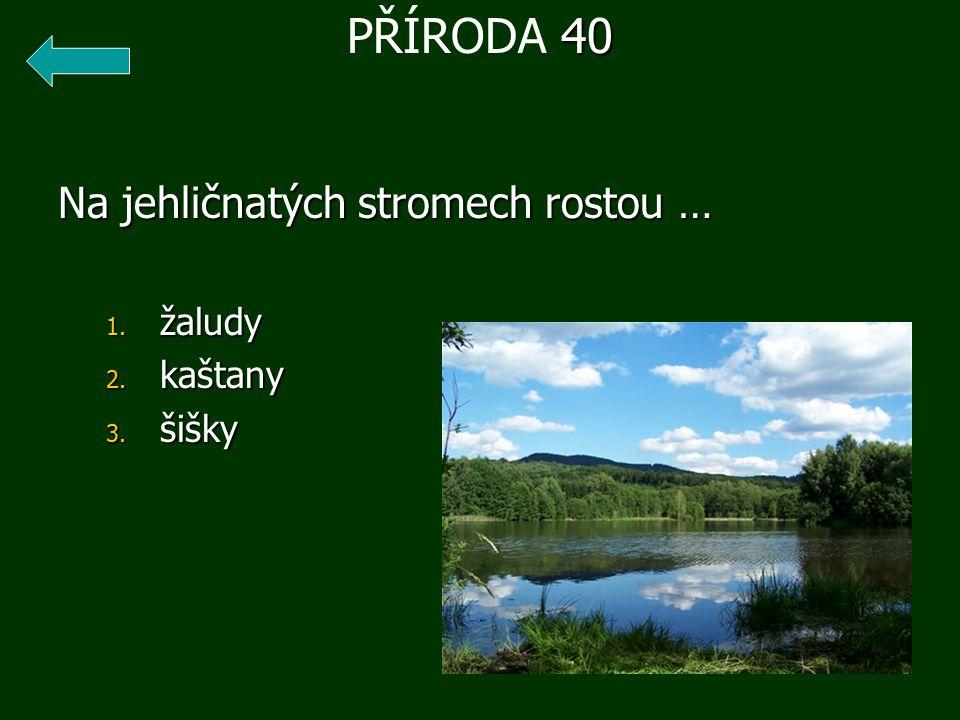 Na jehličnatých stromech rostou … 1. žaludy 2. kaštany 3. šišky 40 PŘÍRODA 40