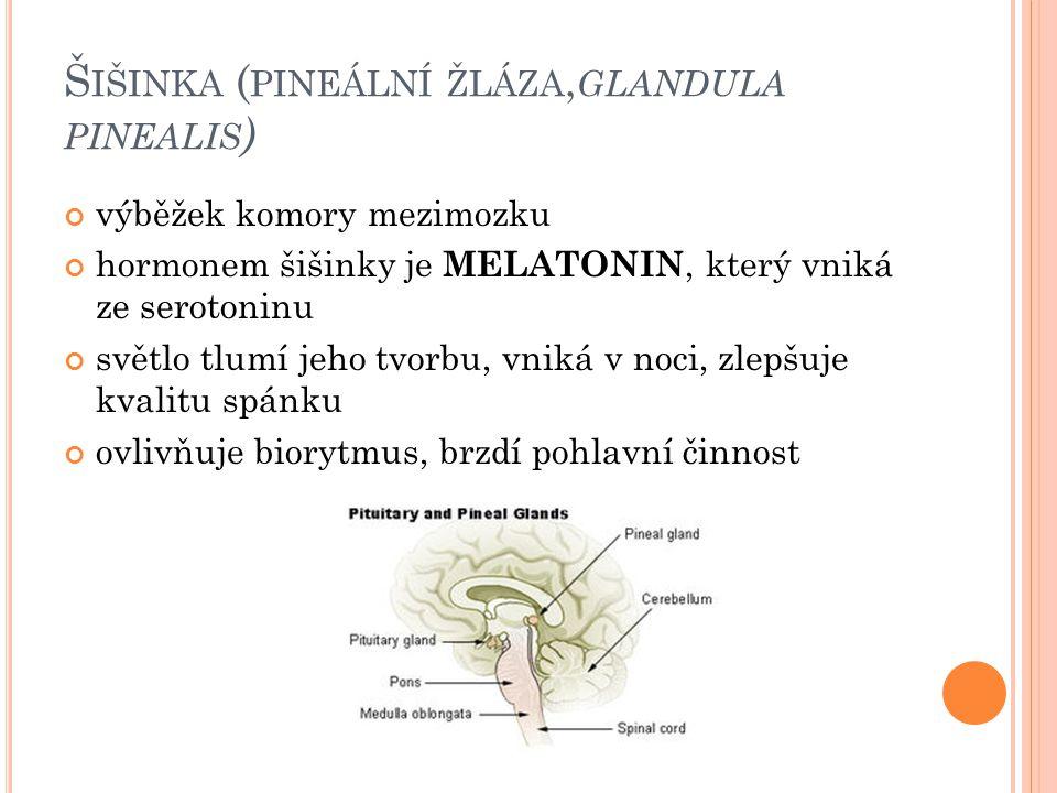 Š IŠINKA ( PINEÁLNÍ ŽLÁZA, GLANDULA PINEALIS ) výběžek komory mezimozku hormonem šišinky je MELATONIN, který vniká ze serotoninu světlo tlumí jeho tvorbu, vniká v noci, zlepšuje kvalitu spánku ovlivňuje biorytmus, brzdí pohlavní činnost