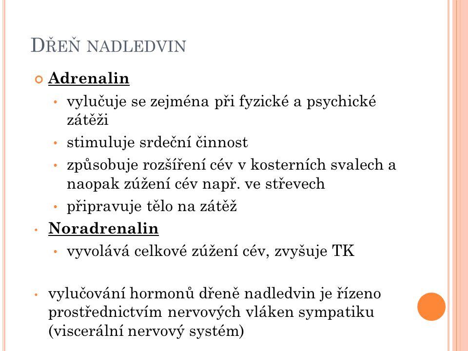 D ŘEŇ NADLEDVIN Adrenalin vylučuje se zejména při fyzické a psychické zátěži stimuluje srdeční činnost způsobuje rozšíření cév v kosterních svalech a
