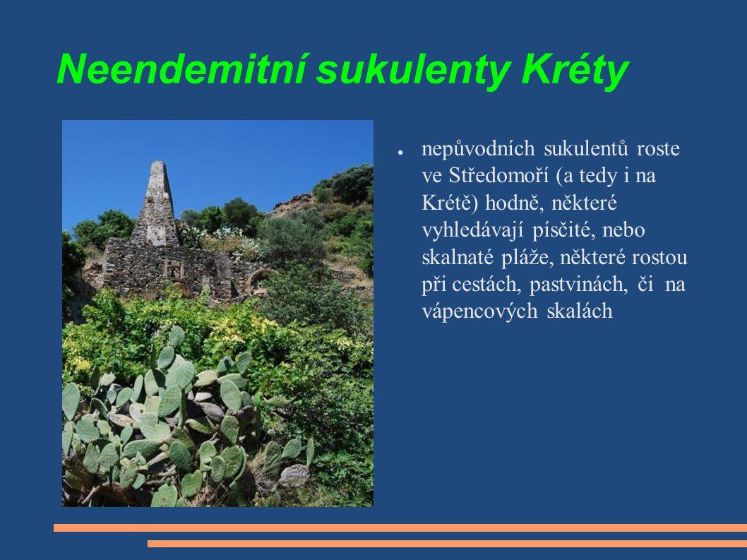 Neendemitní sukulenty Kréty ● nepůvodních sukulentů roste ve Středomoří (a tedy i na Krétě) hodně, některé vyhledávají písčité, nebo skalnaté pláže, n