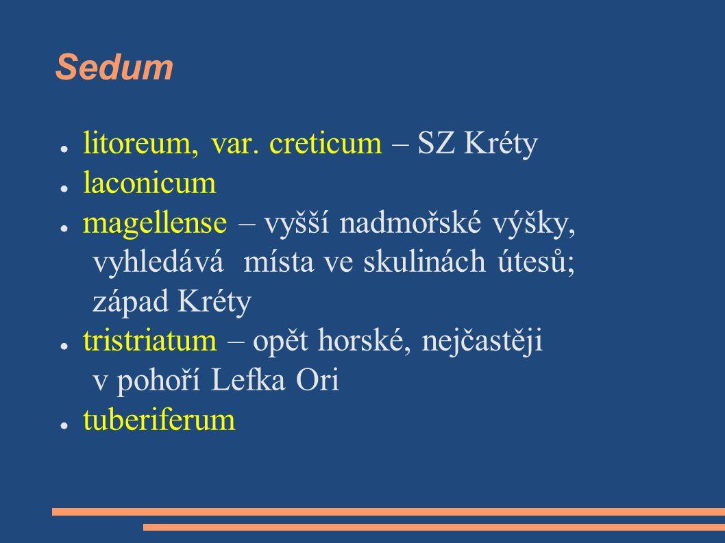 Sedum ● litoreum, var. creticum – SZ Kréty ● laconicum ● magellense – vyšší nadmořské výšky, vyhledává místa ve skulinách útesů; západ Kréty ● tristri
