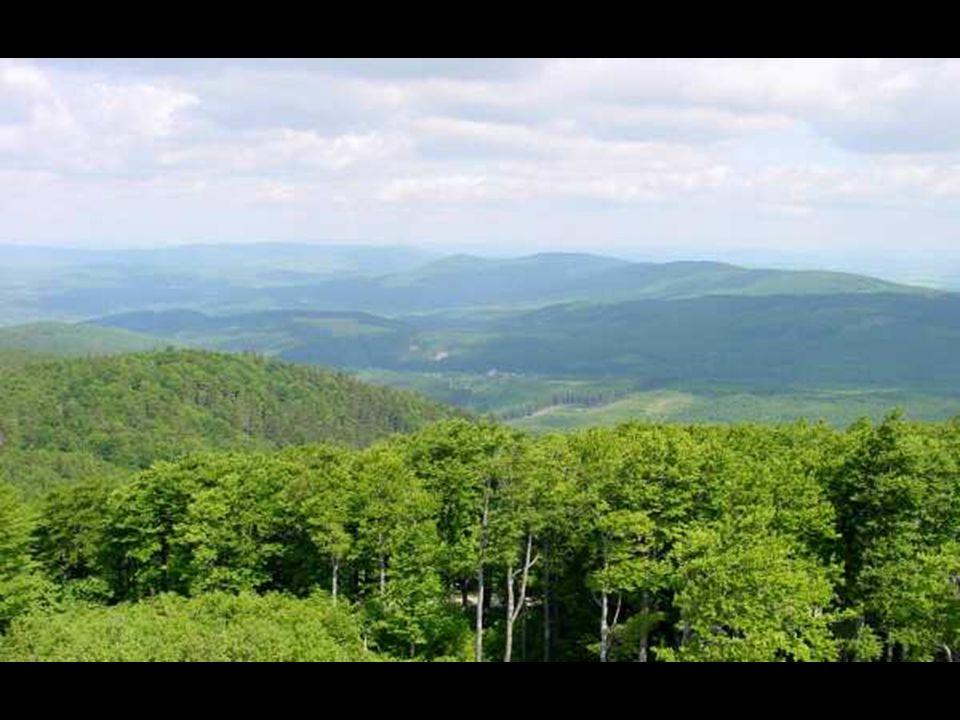 TRVANLIVOST DŘEVA odolnost ničím nechráněného dřeva proti biologickým škůdcům, dřevokazným houbám, plísním, hmyzu a baktériím