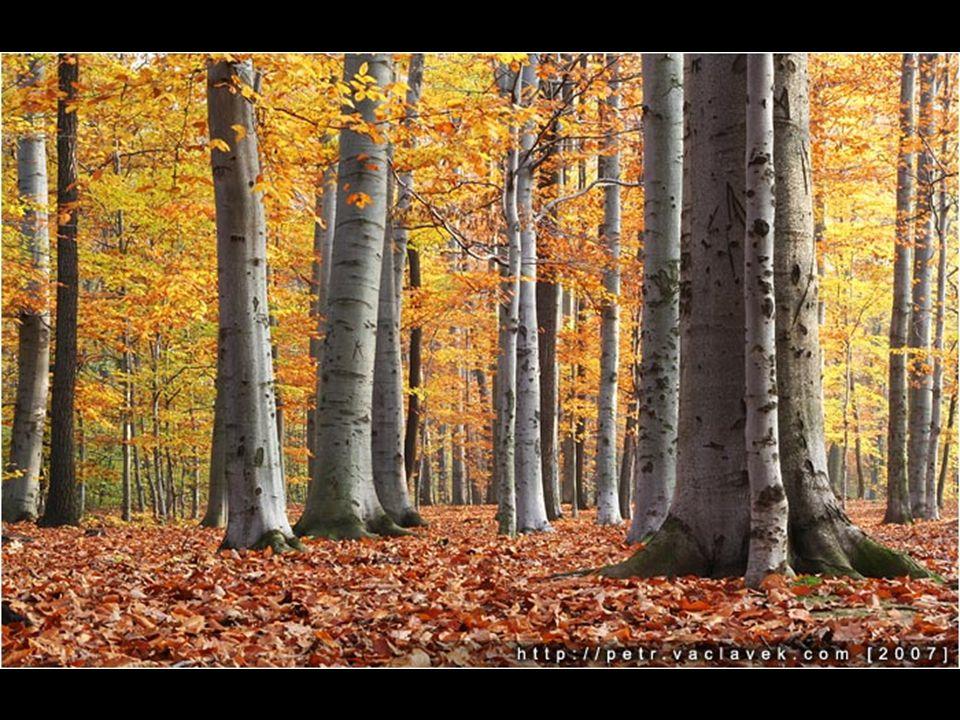 Dřevo bylo prvním materiálem, který se prehistorický člověk naučil používat.