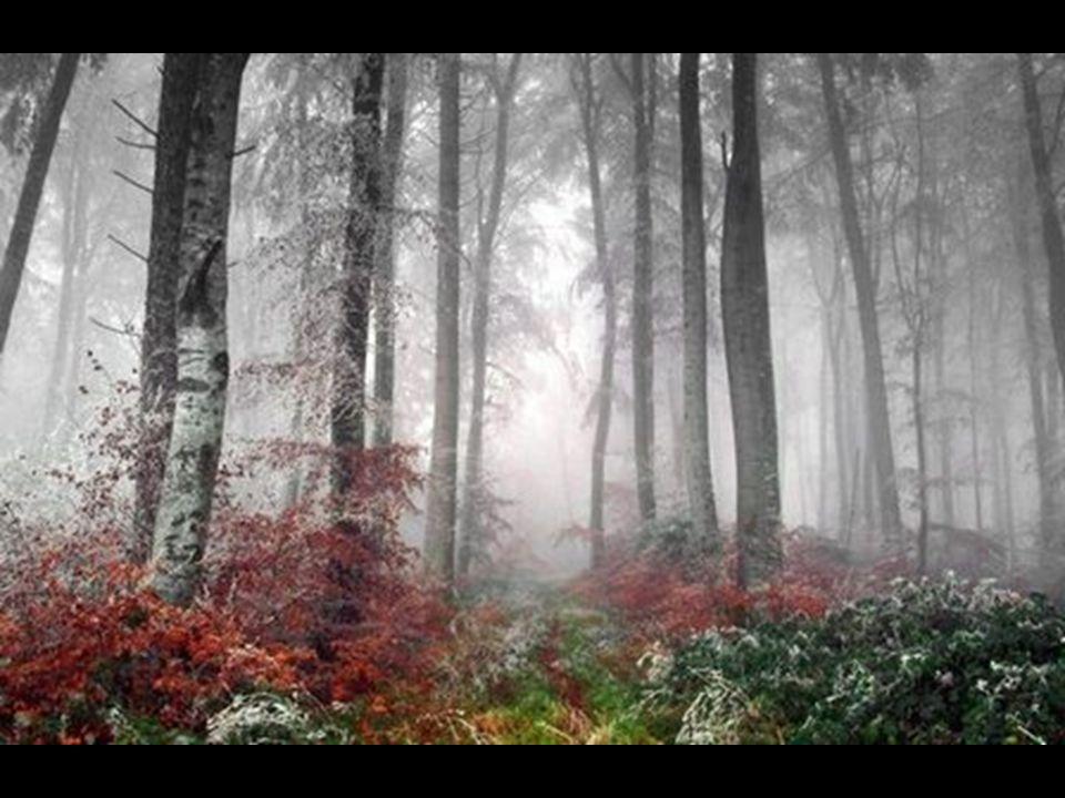 BARVA DŘEVA Jedna z nejvýrazněji hodnotitelných znaků dřeva.