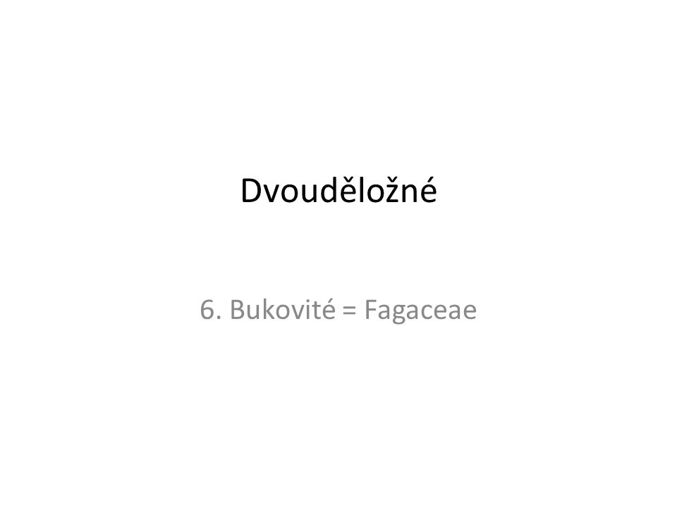Dvouděložné 6. Bukovité = Fagaceae