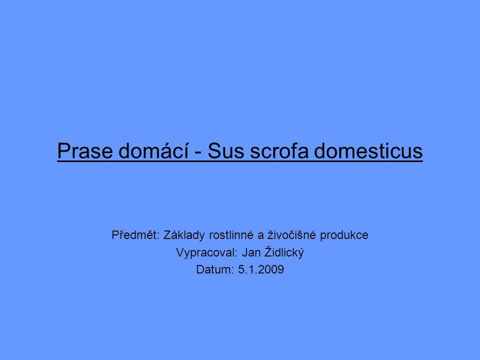 Prase domácí - Sus scrofa domesticus Předmět: Základy rostlinné a živočišné produkce Vypracoval: Jan Židlický Datum: 5.1.2009