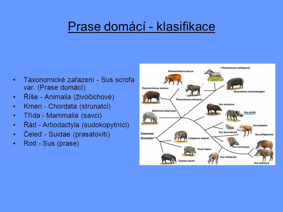 Prase domácí - klasifikace Taxonomické zařazení - Sus scrofa var. (Prase domácí) Říše - Animalia (živočichové) Kmen - Chordata (strunatci) Třída - Mam