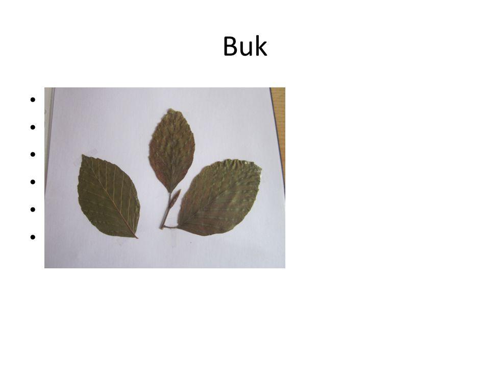 Buk Jednoduché vejčité listy Hladká šedivá kůra Pupeny špičaté Plody- nažky(bukvice) Nečastější- buk lesní Tvrdé dřevo
