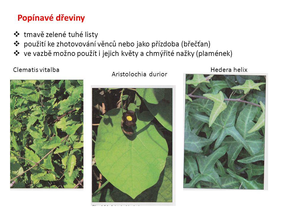 Popínavé dřeviny  tmavě zelené tuhé listy  použití ke zhotovování věnců nebo jako přízdoba (břečťan)  ve vazbě možno použít i jejich květy a chmýři