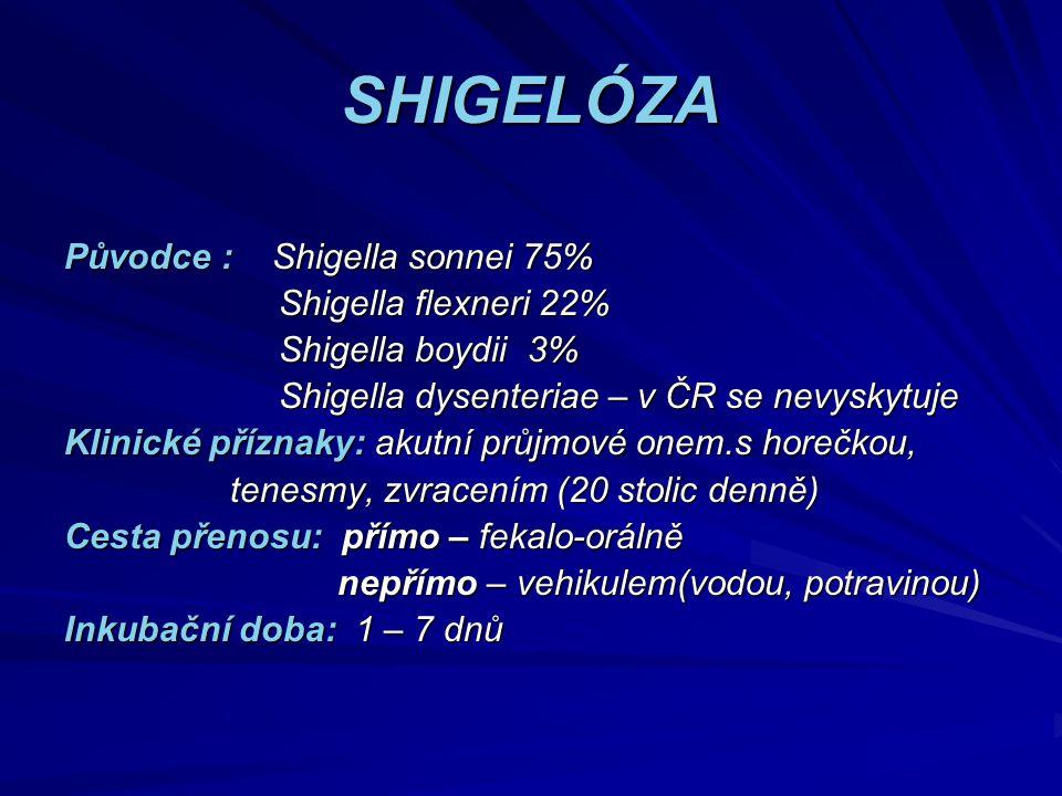 SHIGELÓZA Původce : Shigella sonnei 75% Shigella flexneri 22% Shigella flexneri 22% Shigella boydii 3% Shigella boydii 3% Shigella dysenteriae – v ČR