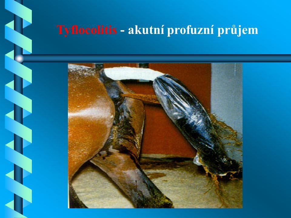 Tyflocolitis - akutní profuzní průjem